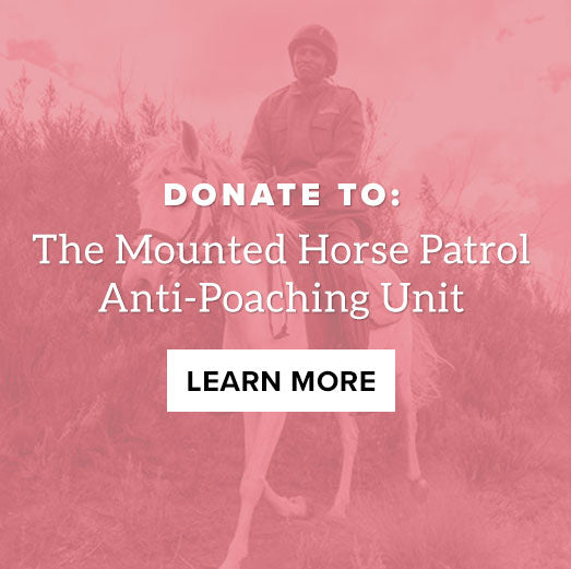 Donate to IEF: Mounted Horse Patrol Anti-Poaching Unit