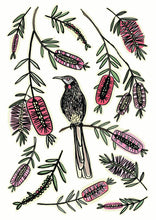 Load image into Gallery viewer, wattle bird A3 art print