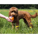 Rosewood Giggling Sound Interactive Treat Ball