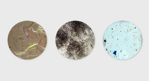 An image of microfibres collected.