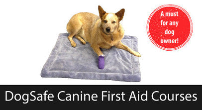 DogSafe Canine First Aid Courses
