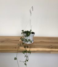Load image into Gallery viewer, Ceropegia Woodii - String of Hearts