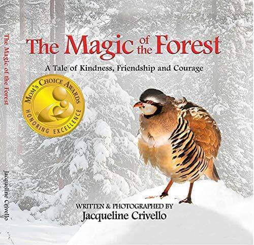 The Magic of the Forest - Hardcover Book - jcrivello.com