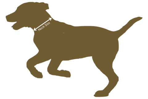 Where to measure your dogs neck for a collar