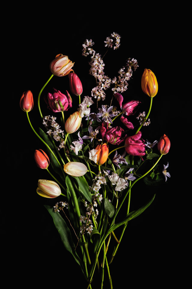 colorful french tulips with spring flowers with a black background. Floral art prints for all interiors