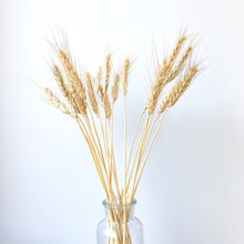 Load image into Gallery viewer, Wheat - Natural