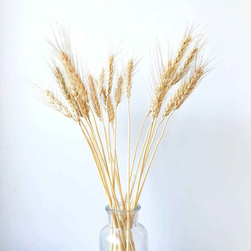 Wheat - Natural