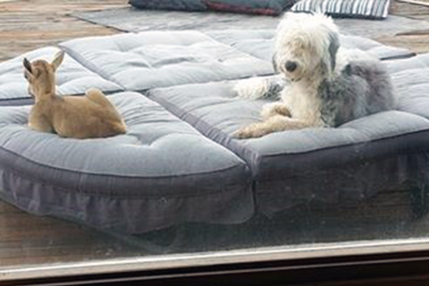 Gabby and Daisy lounging on a chair on the deck