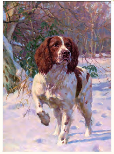 Fred Hayward - Best Foot Forward - Springer Spaniel