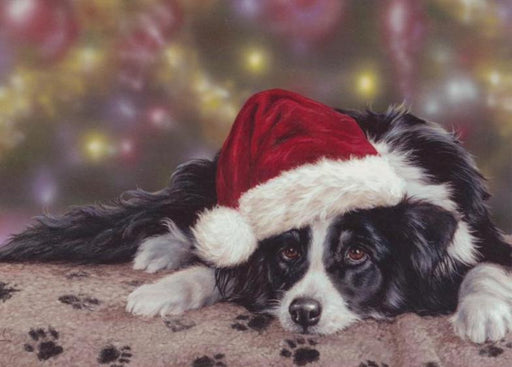 Paul Doyle - Waiting for Santa - Border Collie