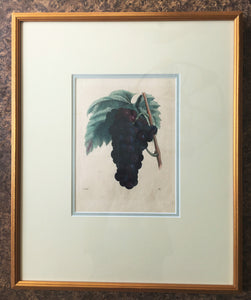 German Hand Colored Fruit Engraving, Number I, circa 1846