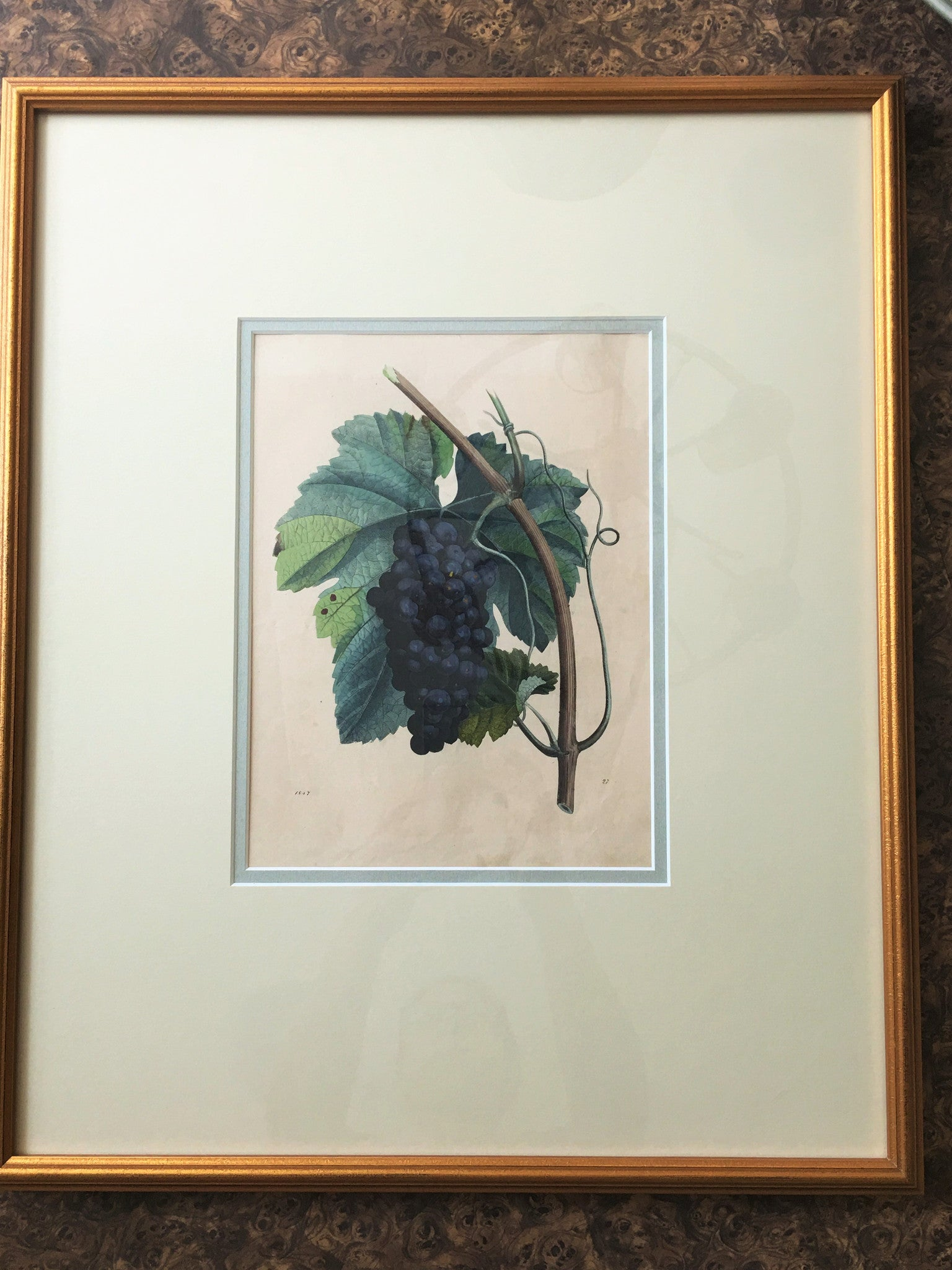 German Hand Colored Fruit Engraving, Number II, circa 1847