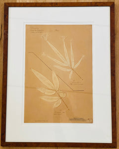 Antique French Herbier, early 20th century