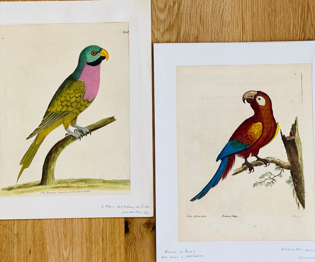 Antique English Ornithology Engravings, c. late 18th century, Set of Two