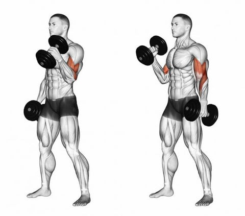 Bigger-Arms-Exercise