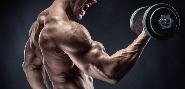 Legal Steroids That Really Work