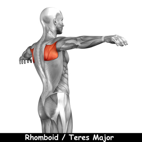 Rhomboid-and-Teres-Major