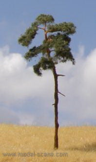 Model Scene BR100 Pine Trees (3) Medium with Trunk - (80mm - 110mm high)