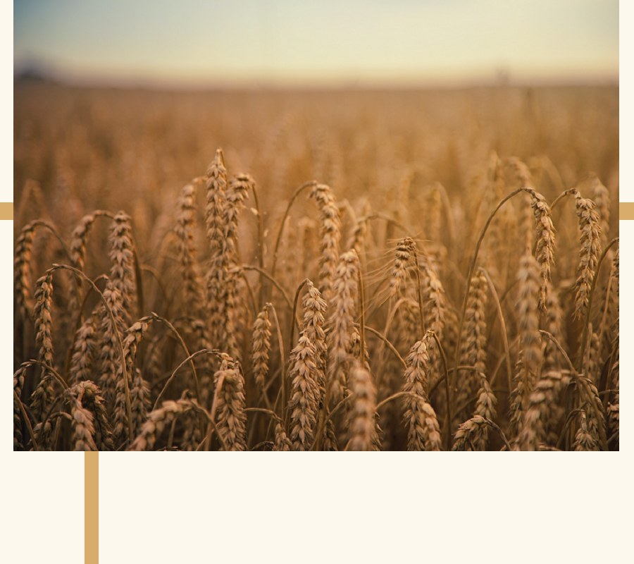 The Introduction of Grain Spirits