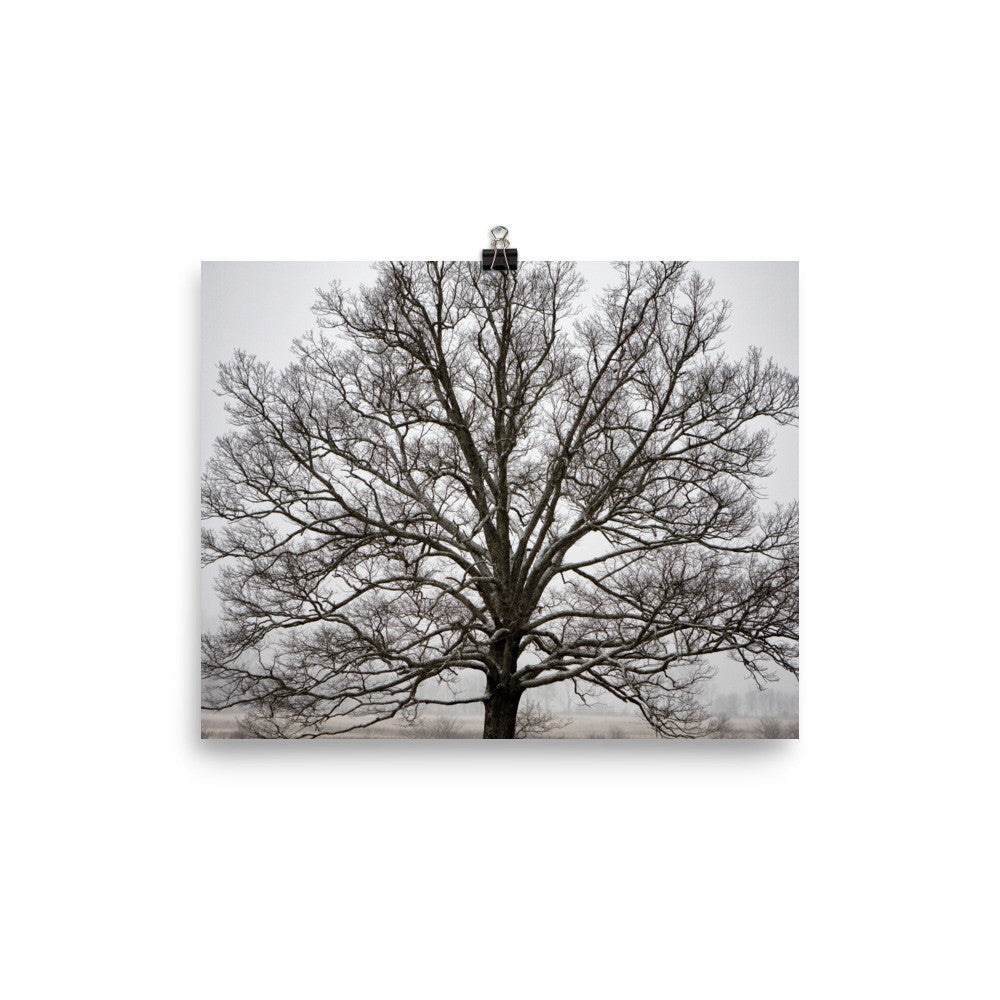 Tree Art Prints for Sale