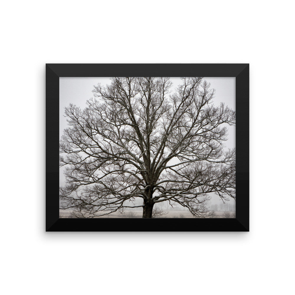 Tree Wall Art Prints for Sale