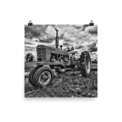 The Ox Unframed Black and White Poster