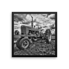The Ox Framed Black and White Poster