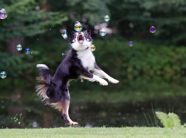 Dog trying to grab bubbles