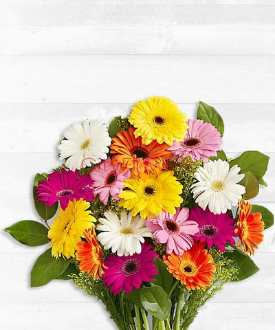 COLORFUL GERBERA BEAUTY flowers CityFlowersIndia