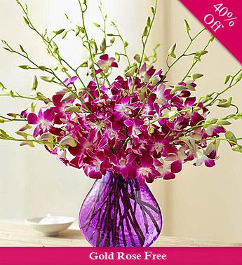 Orchids Wow By City Flowers - Freen Golden Rose flowers CityFlowersIndia