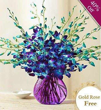 Orchid Surprise By City Flowers - Free Gold Rose flowers CityFlowersIndia