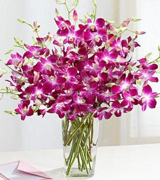 Purple Orchids Devotion flowers CityFlowersIndia