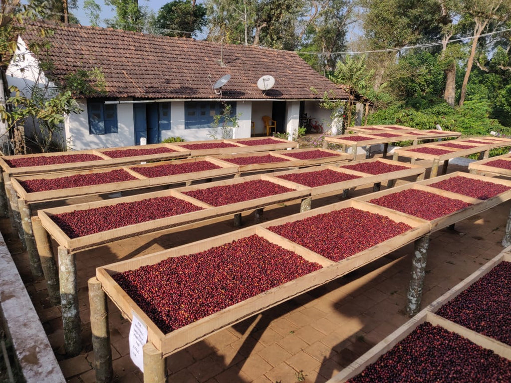 What is speciality coffee