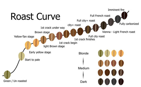 Coffee roasting stages