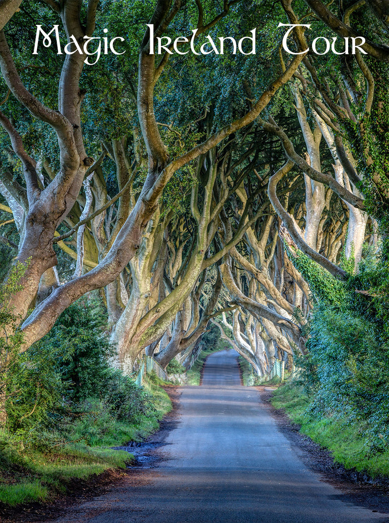 Guided tour, Magic Ireland, Game of Thrones locations, The Dark Hedges, guided Irish tours