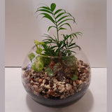 Terrarium Plant in Glass