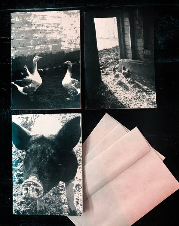 Barnyard Animals - Set of 3 note cards