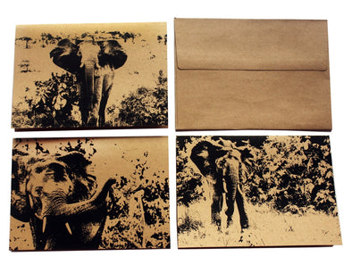 African Elephants assorted note card set of 3