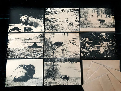 Animals of Yellowstone and Grand Teton National Parks assorted boxed set of 8 folded note cards