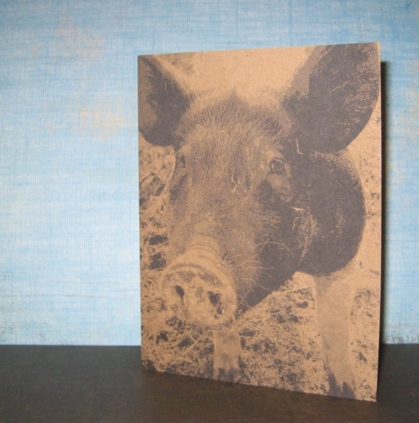 Pigs note card set