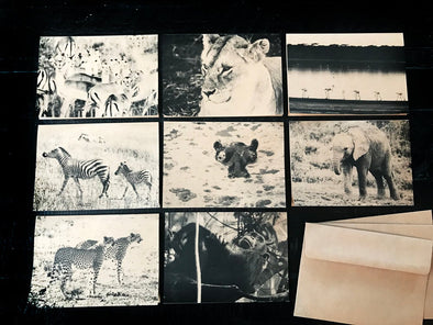 Safari Animals of Africa assorted boxed set of 8 folded note cards