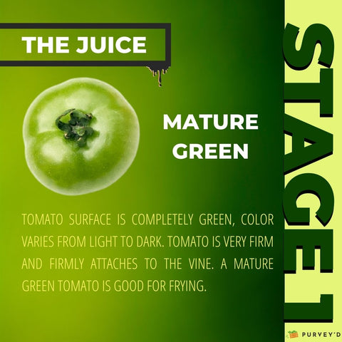 STAGE 1 MATURE GREEN: TOMATO SURFACE IS COMPLETELY GREEN, COLOR VARIES FROM LIGHT TO DARK. tomato is very firm and firmly attaches to the vine. a Mature green tomato is good for frying.