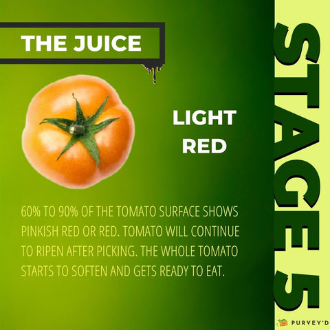 STAGE 5 LIGHT RED: 60% TO 90% OF THE TOMATO SURFACE SHOWS PINKish red OR RED. tOMATO WILL CONTINUE TO RIPEN AFTER PICKING. THE WHOLE TOMATO STARTS TO SOFTEN AND GETS READY TO EAT.