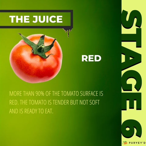 STAGE 6 RED: more than 90% OF THE TOMATO SURFACE is red. The tomato is tender but not soft AND IS READY TO EAT.