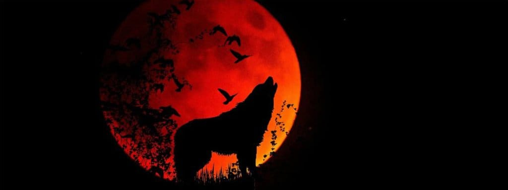 wolf in red moon