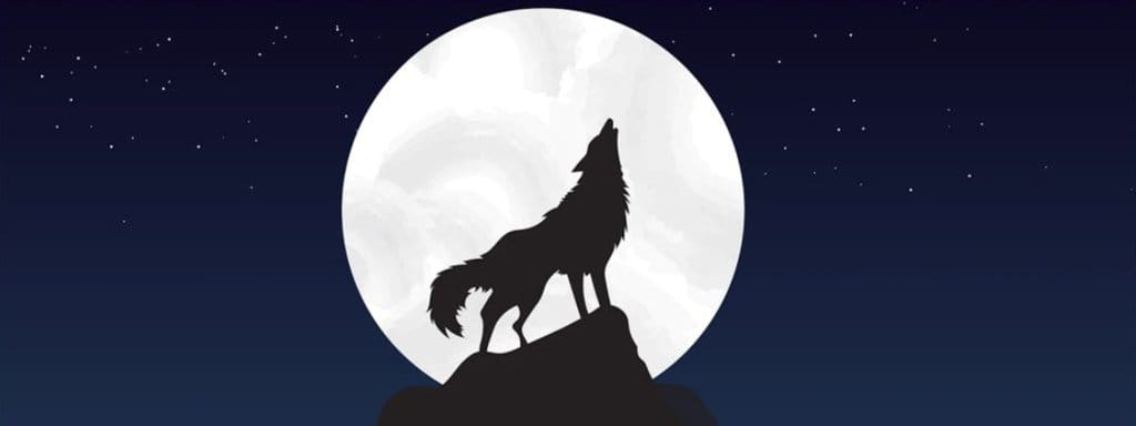 howling at the top of rock