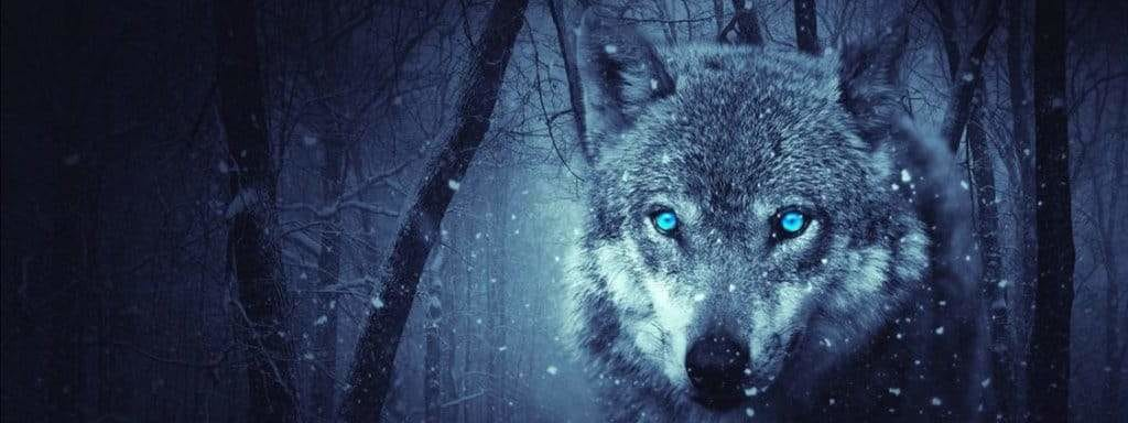 wolf in the forest snow
