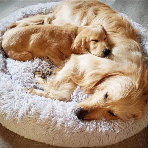 cat bed in USA, calming bed for cats, donut dog bed USA, anti anxiety dog bed.