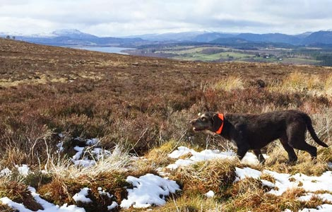 Luise Counting Grouse - Pointers