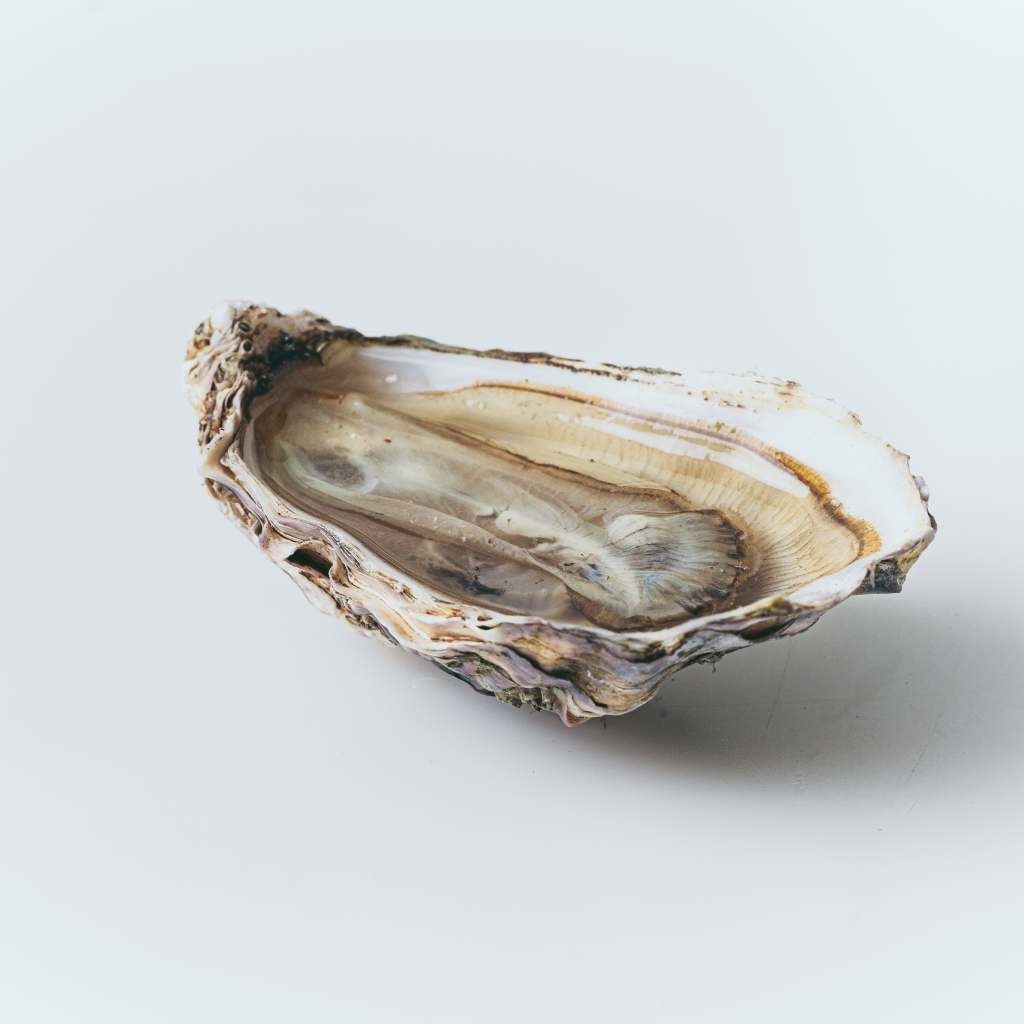 Oyster Gift Box by Porlock Bay Oysters
